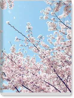 우리안 2015년 우리안 03월